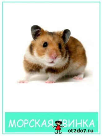 Домашние животные. Карточки