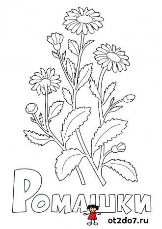 Раскраски на букву Р