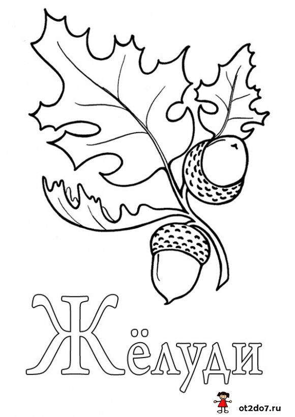 Раскраски на букву Ж
