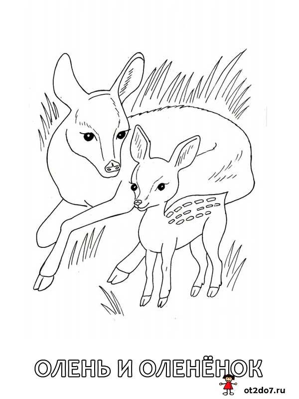 Раскраски. Животные леса